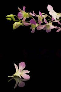 po kremacji kwiaty